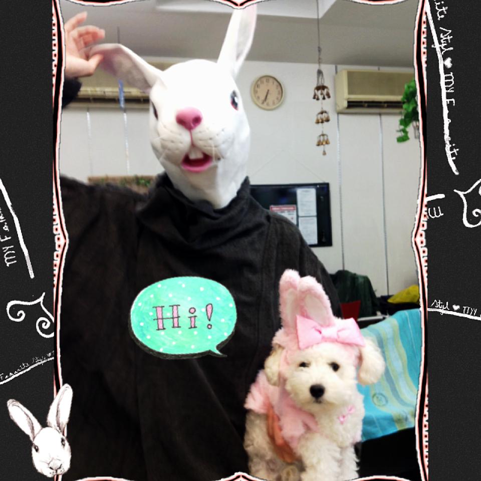 ナゾウサギ